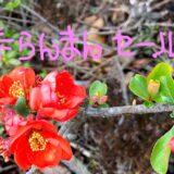 春らんまんセール♬